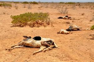 Torka på Afrikas horn. © Oxfam East Africa